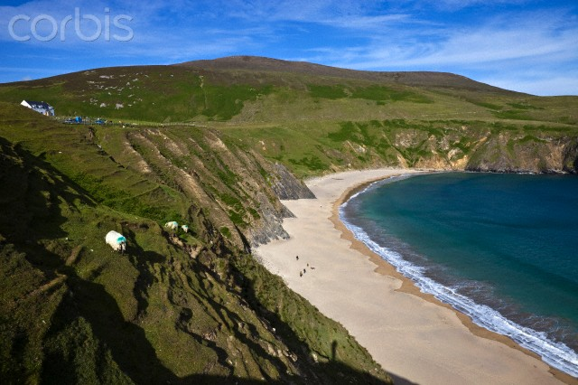 Ireland, Donegal County, near Glencolumbkille, Malin Beg, west side of the Slieve League cliffs, Silver Strand Beach and sheep